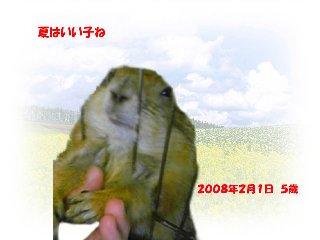 090906natu-tyan03.jpg