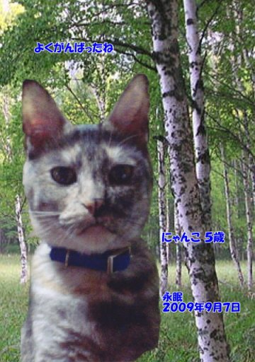 090908nyanko-tyan.jpg