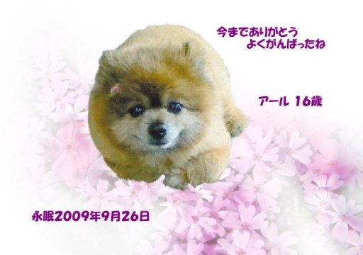 090926nakamori-aru-tyan.jpg