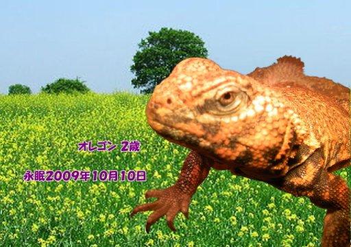 091011takeda-oregon-tyan.jpg