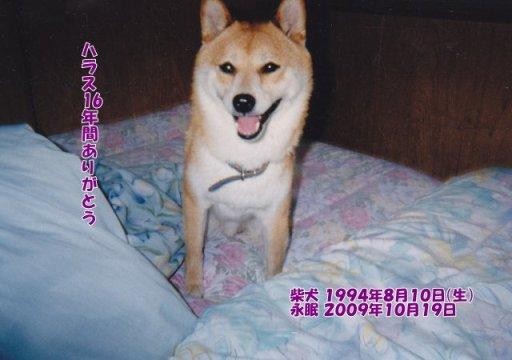 091020motohasi-harasu-tyan.jpg