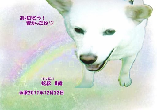 111223dejima-jyamon-tyan.jpg