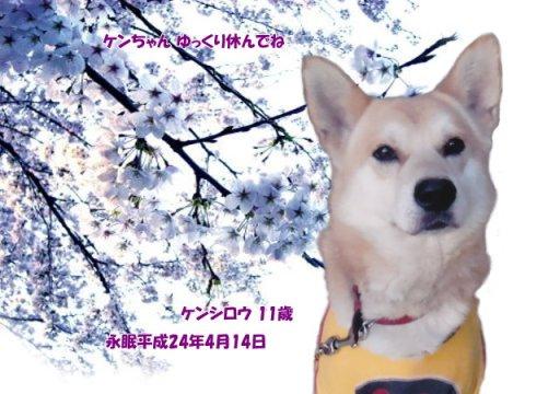 120415tuji-kensirou-tyan.jpg
