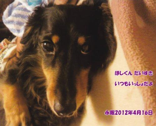 120417sakamoto-hosi-tyan.jpg