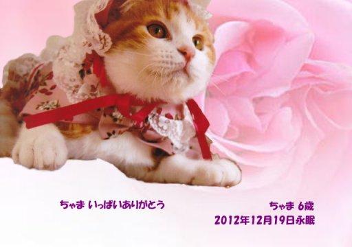 121220nakayama-tyama-tyan.jpg