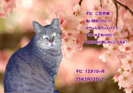 130213tumura-tibi-tyan.jpg