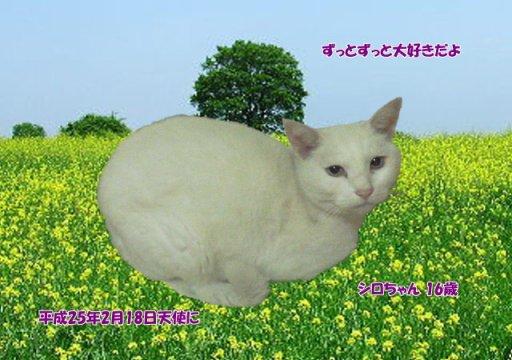 130219ueda-siro-tyan.jpg
