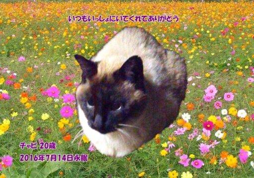 160715ueda-tyabi-tyan.jpg