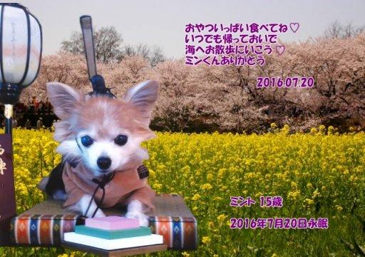 160721yorioka-minnto-tyan.jpg