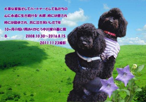 160815nakagawa-tarou-tyan.jpg