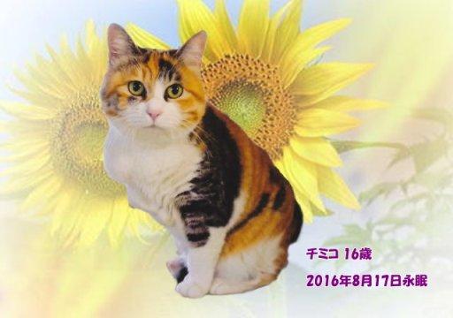 160818tanabe-timiko-tyan.jpg
