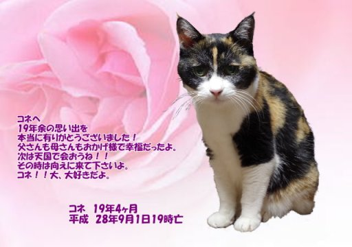 160903tumura-kone-tyan.jpg