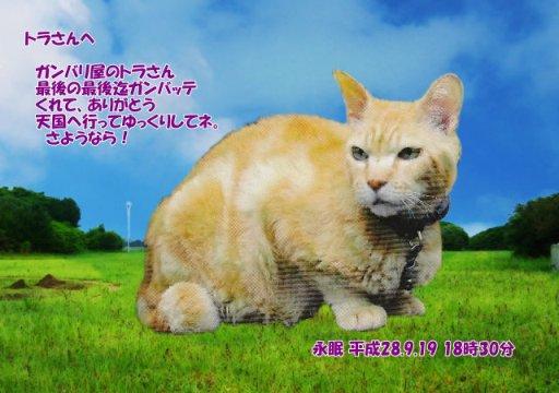 160921tumura-tora-tyan.jpg