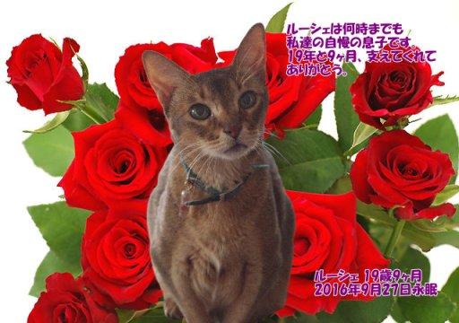 160928yagi-rouche-tyan.jpg