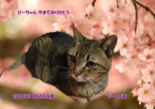 161103hirota-pii-tyan.jpg