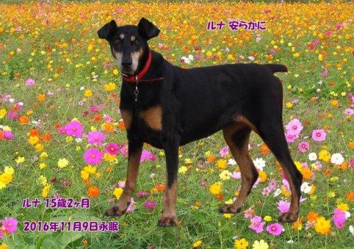 161109tosano-runa-tyan01.jpg