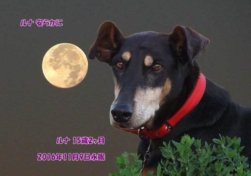 161109tosano-runa-tyan07.jpg