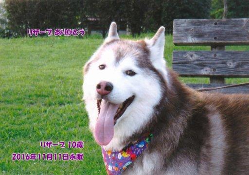 161112koyama-reserve-tyan.jpg