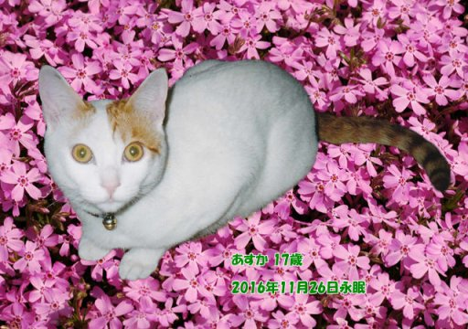 161128hagiwara-asuka-tyan.jpg