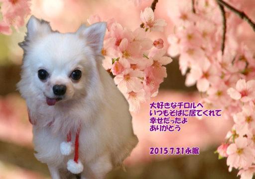 170106tao-tiroru-tyan150801.jpg