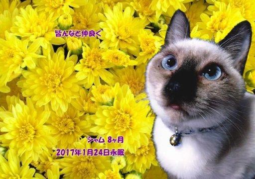 170125takahasi-syamu-tyan.jpg