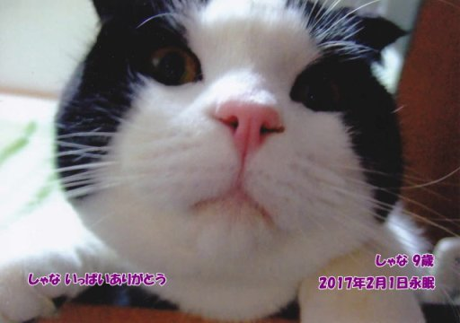 170203nakayama-syana-tyan.jpg