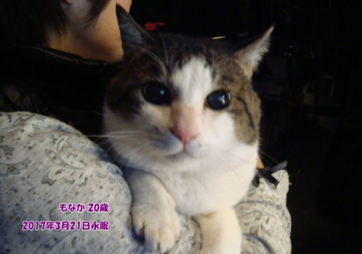 170322baba-monaka-tyan.jpg