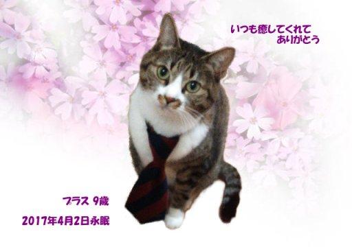 170404morita-purasu-tyan.jpg