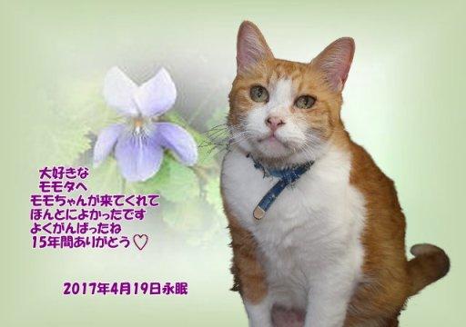 170421fukui-momota-tyan.jpg