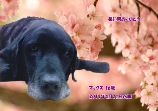 170423yosimizu-makkusu-tyan.jpg