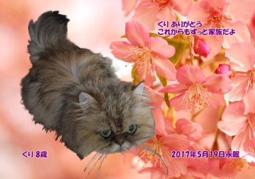 170519nakamura-kuri-tyan.jpg