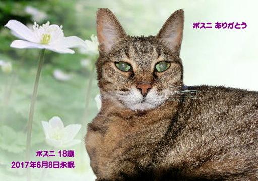170609toriyama-bosuni-tyan.jpg