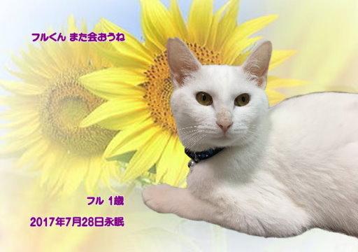 170729yukimoto-furu-tyan.jpg