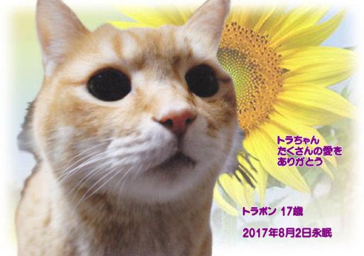 170804siinoki-toraponn-tyan.jpg