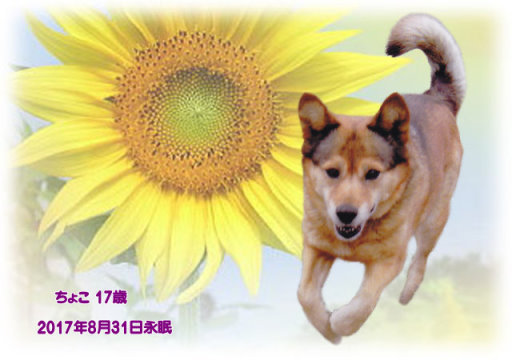 170901kosugi-tyoko-tyan.jpg