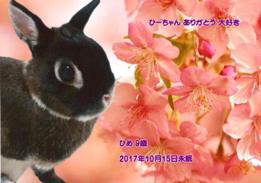 171015miyosi-hime-tyan.jpg