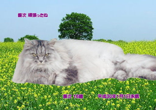 180103isozaki-ginnji-tyan.jpg