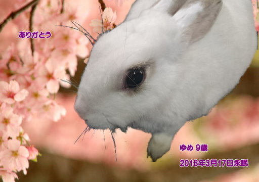 180317kennmisaki-yume-tyan.jpg