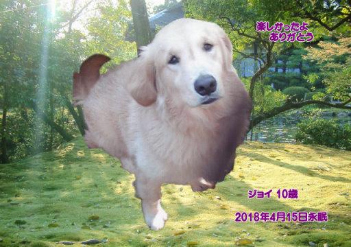 180416maeda-joy-tyan.jpg