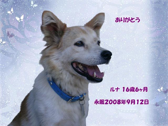 080913simazu-runa-tyan.jpg