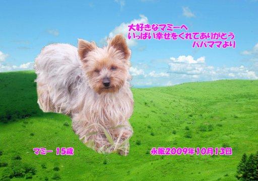091014yamamoto-mammy-tyan.jpg