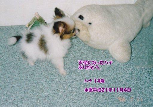 091105terayama-hana-tyan01.jpg