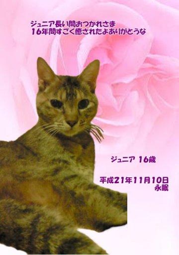 091110tanaka-junia-tyan01.jpg