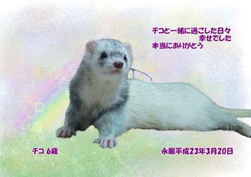 110321kawamoto-tiko-tyan.jpg