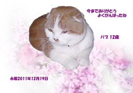 111220ikegami-babu-tyan.jpg