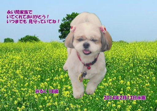 140215kamitaka-miruku-tyan.jpg