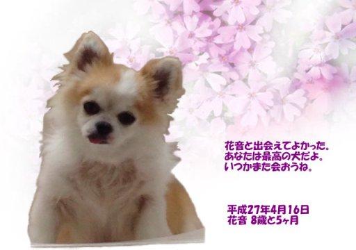 150417ookawa-kanonn-tyan.jpg