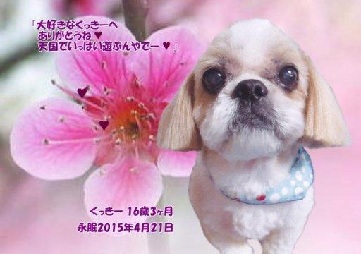 150422kubo-kukkii-tyan.jpg