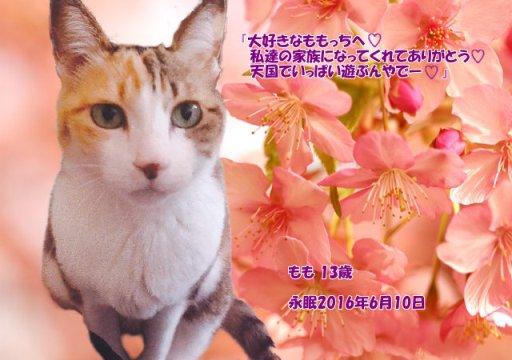 160611kubo-momo-tyan.jpg