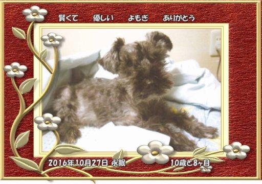 161028kesi-yomogi-tyan.jpg